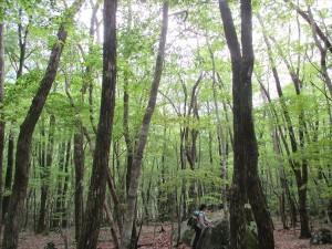 森のセラピー2